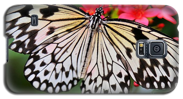 Butterfly Spectacular Galaxy S5 Case