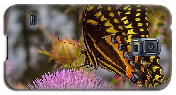 Butterfly Visit Galaxy S5 Case
