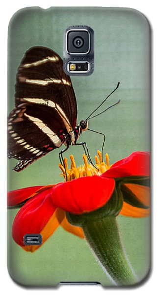 Butterfly Zebra Longwing On Zinnia Galaxy S5 Case