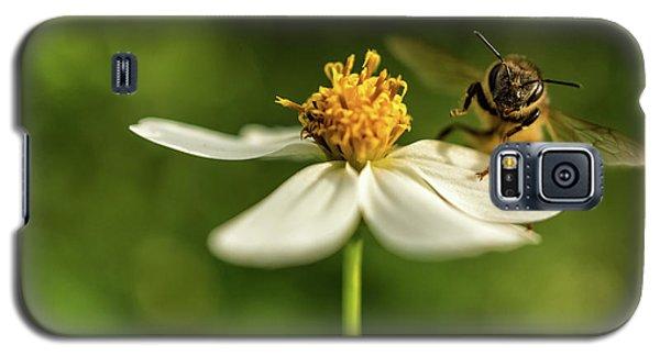 Buzz Off Galaxy S5 Case