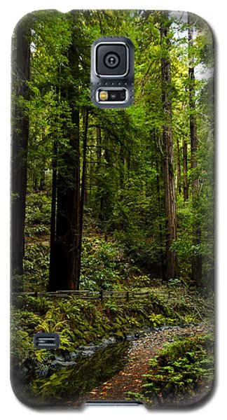 By The Stream In Muir Woods Galaxy S5 Case