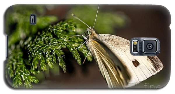 Cabbage Butterfly On Evergreen Bush Galaxy S5 Case