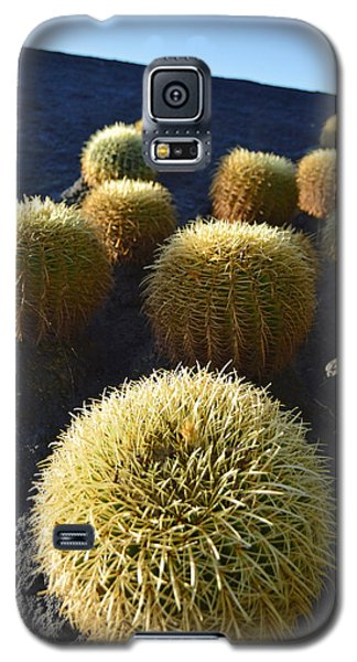 Galaxy S5 Case featuring the photograph Cacti On The Roof by Marek Stepan