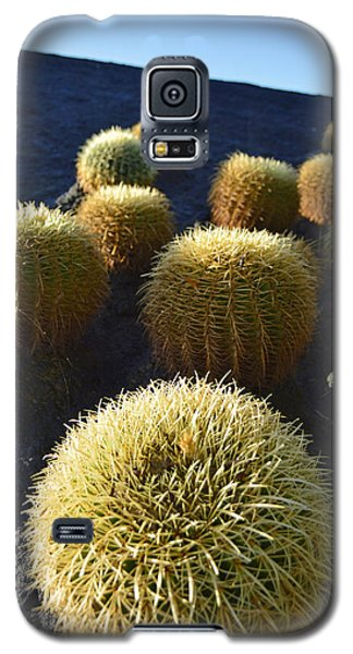 Cacti On The Roof Galaxy S5 Case by Marek Stepan