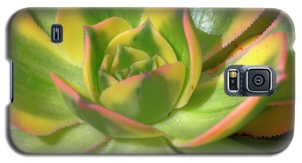 Galaxy S5 Case featuring the photograph Cactus 4 by Jim and Emily Bush