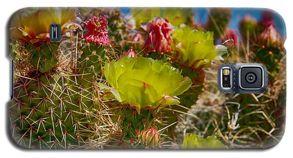 Cactus At The End Of The Road Galaxy S5 Case