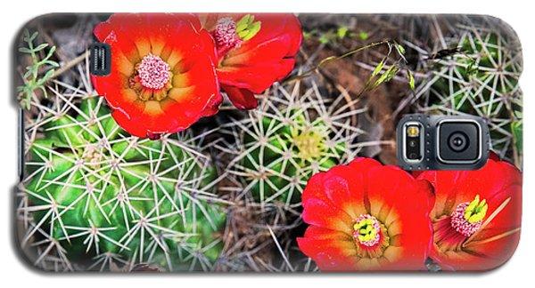 Cactus Bloom Galaxy S5 Case