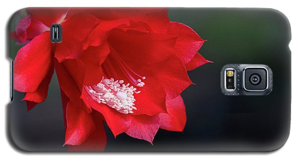 Cactus Blossom Galaxy S5 Case