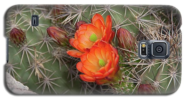 Cactus Blossoms Galaxy S5 Case by Monte Stevens
