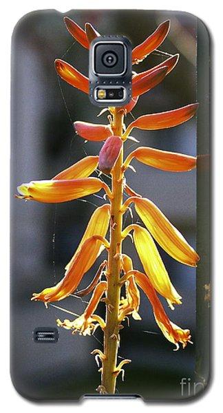 Galaxy S5 Case featuring the photograph Cactus Blum On My Balcony. by Viktor Savchenko