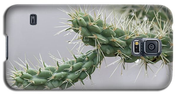 Cactus Branch With Wet White Long Needles Galaxy S5 Case