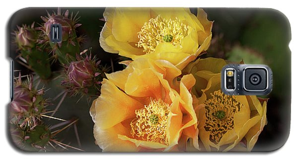 Yellow Cactus Flowers Galaxy S5 Case