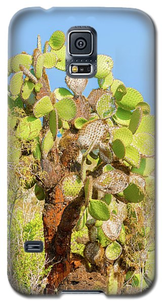 Cactus Trees In Galapagos Islands Galaxy S5 Case by Marek Poplawski