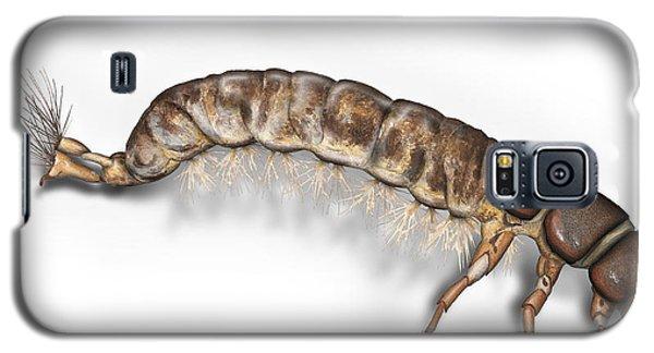 Caddisfly Larva Nymph Psychomiidae Hydropsyche Pellucidula -  Galaxy S5 Case