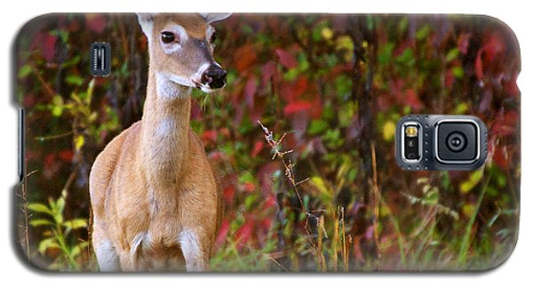 Galaxy S5 Case featuring the photograph Cades Cove Doe by Bob Decker
