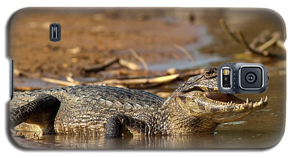 Caiman With Open Mouth Galaxy S5 Case