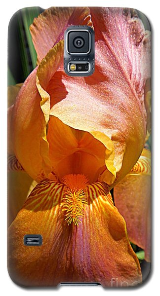 Cajun Sunset Galaxy S5 Case