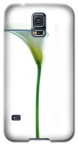 Cala Single Color Galaxy S5 Case by Rebecca Cozart