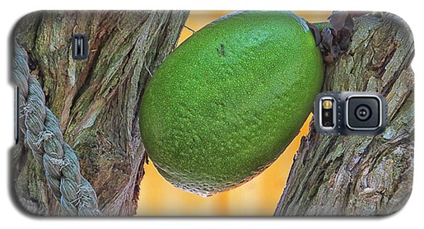 Galaxy S5 Case featuring the photograph Calabash Fruit by Bill Barber