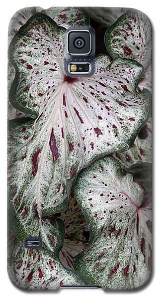 Caladium Leaves Galaxy S5 Case