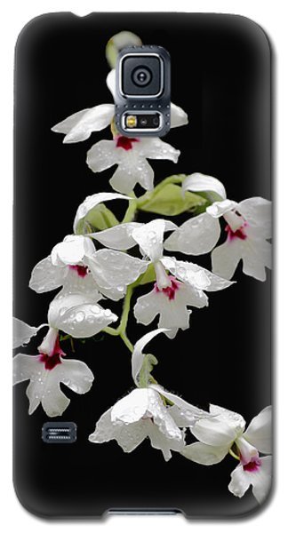 Calanthe Vestita Orchid Galaxy S5 Case