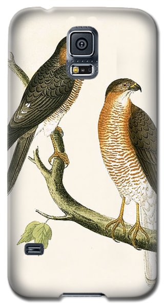 Calcutta Sparrow Hawk Galaxy S5 Case