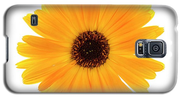 Galaxy S5 Case featuring the photograph Calendula Flower by Elena Elisseeva
