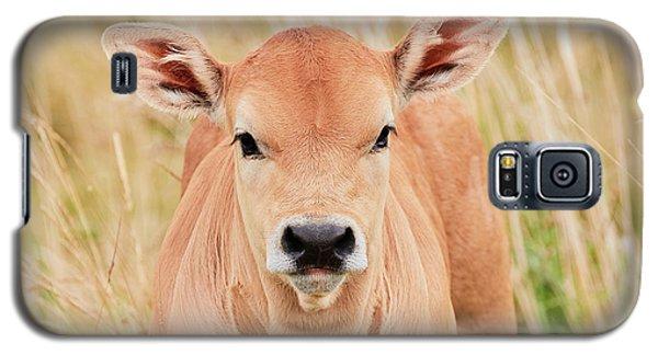 Calf In The High Grass Galaxy S5 Case