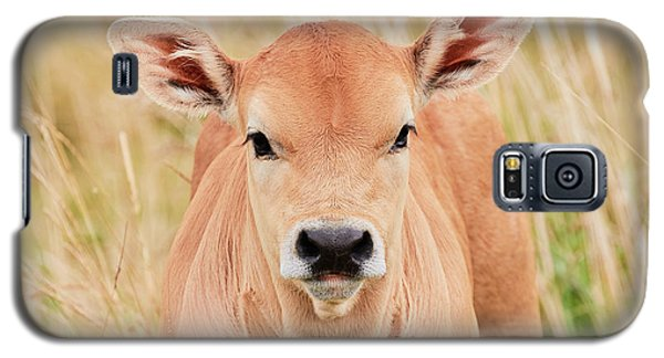 Calf In The High Grass Galaxy S5 Case