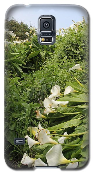 Galaxy S5 Case featuring the photograph Cali Can You Hear Me by Marie Neder