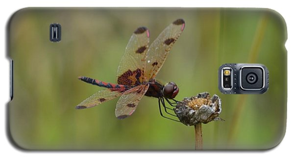 Galaxy S5 Case featuring the photograph Calico Pennant by Randy Bodkins