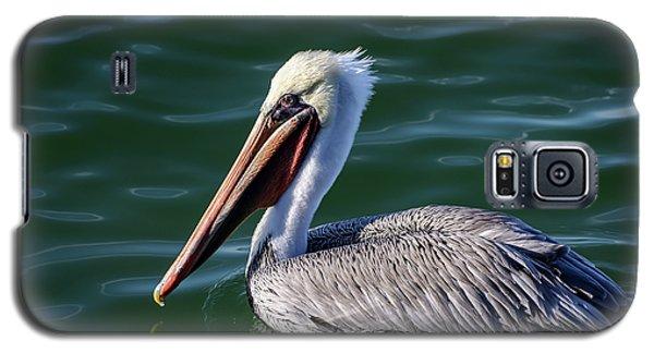 California Brown Pelican In Late Summer Galaxy S5 Case