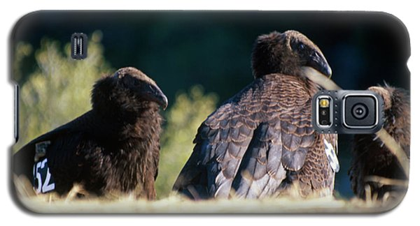 California Condors Galaxy S5 Case