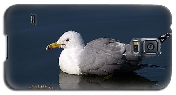 Galaxy S5 Case featuring the photograph California Gull by Sharon Talson