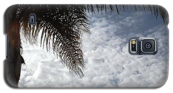 California Palm Tree Half View Galaxy S5 Case by Matt Harang