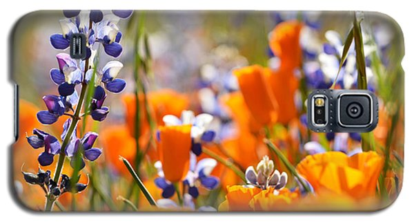 California Poppies And Lupine Galaxy S5 Case by Kyle Hanson