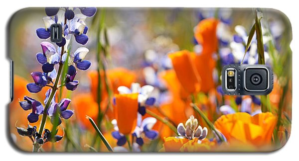 California Poppies And Lupine Galaxy S5 Case