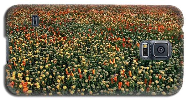 California Poppies At Dawn Lancaster California Galaxy S5 Case
