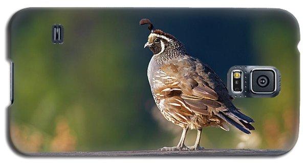 California Quail Galaxy S5 Case