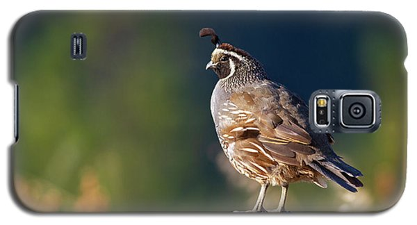California Quail Galaxy S5 Case