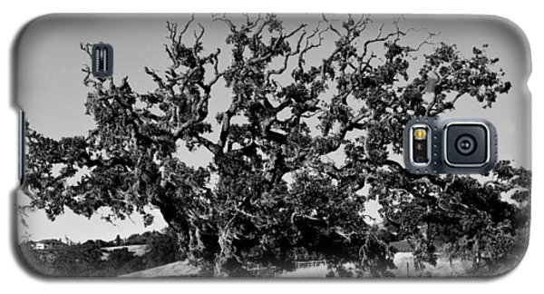 California Roadside Tree - Black And White Galaxy S5 Case by Matt Harang