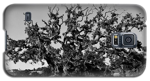 California Roadside Tree - Black And White Galaxy S5 Case
