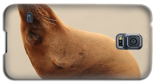 Galaxy S5 Case featuring the photograph California Sea Lion In Angle Of Repose by Max Allen