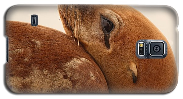 Galaxy S5 Case featuring the photograph California Sea Lion Pup Resting Against Mother by Max Allen