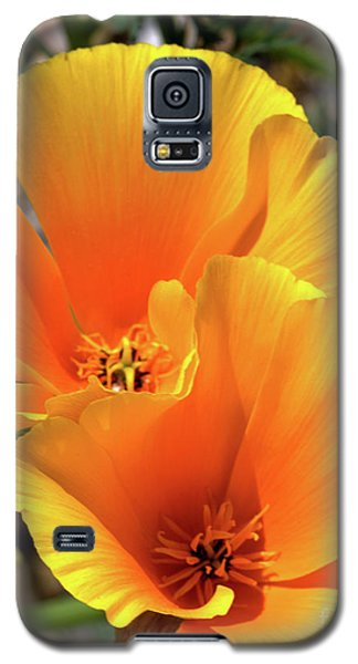 Galaxy S5 Case featuring the photograph Californian Poppy by Baggieoldboy