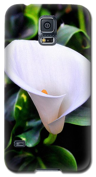 Galaxy S5 Case featuring the photograph Calla Lily by Glenn McCarthy