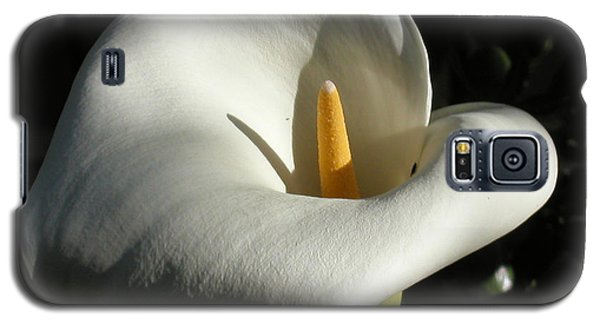 Calla Lily-santa Monica - 2005 Galaxy S5 Case by Ann Tracy