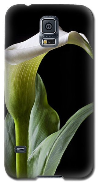 Calla Lily With Drip Galaxy S5 Case by Garry Gay