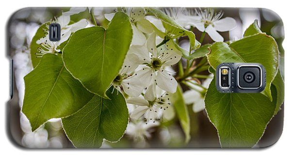 Callery Pear Tree Bloom Galaxy S5 Case