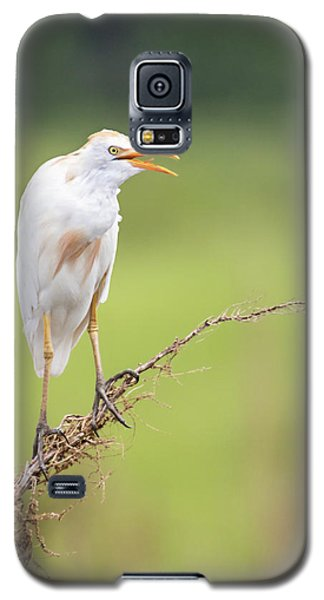 Calling For My Mate Galaxy S5 Case